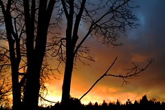 to brew a storm (.leila) Tags: seattle blue trees winter sunset red sky orange usa storm color colour nature silhouette yellow clouds america evening unitedstates dusk dramatic pacificnorthwest washingtonstate gloaming threetoned