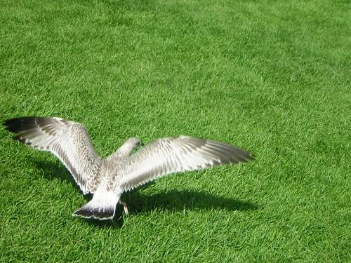 Bird in fliight!