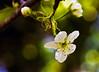 It's Spring Baby!!!! (edwardleger) Tags: white flower nature spring louisiana bokeh 2008 mywinners ilovemypic theperfectphotographer edwardleger exquisiteimage showmeyourqualitypixels edwardnleger