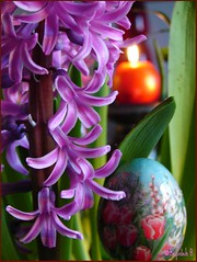 Norooz    نوروز (Sepideh!) Tags: light history march persian spring candle culture newyear eggs iranian tradition 2008 soe hyacinth vernalequinox springequinox norooz norouz navroz nawruz nowruz noruz newroz nauruz nowrouz haftseen نوروز farvardin 2567 sepideh celeberation 1387 paintedeggs forgrandma nawroz novruz navruz 7ss northernamerica سنبل nauroz nawrúz nevruz navrez наврӯз narooz گلسنبل nowrūz nowroj navroj سنبلايرانى eyiran