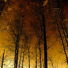 The Memory Of The Trees !!! (Denis Collette...!!!) Tags: trees wild canada reflection bravo with quebec pic right save
