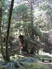 Little tree big stump