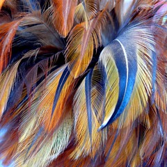 ticklish? (Lori-B.) Tags: feathers housework supershot abigfave irresistiblebeauty megashot tryingtodosomedusting