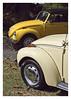 17_02_05_163p (2) (Quito 239) Tags: volkswagen 1971volkswagen 1971volkswagensuperbeetle superbeetleconvertible vw bug vocho escarabajo puertorico haciendaigualdad volky
