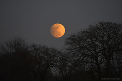 Pre-Eclipse Moon Rising (RRP Photography) Tags: moon moonrise fullmoon bluemoon