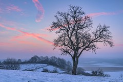 *winter morning* (albert.wirtz) Tags: sunrise sonnenaufgang bergweiler wittlich wittlichersenke twilight bluehour blauestunde albertwirtz tree snow rheinlandpfalz rhinelandpalatinate deutschland germany eifel südeifel eifelmosel moseleifel sky bluesky burningsky winter morning wintermorning frozen frost dawn