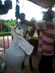 P1210245 (claireger) Tags: colombia cafe finca salento