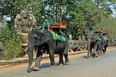 Cambodia-2410 - Angkor Thom's Taxi !! (archer10 (Dennis)) Tags: city trip travel people holiday elephant history stone temple ancient nikon ruins asia cambodia tour buddhist free tourist unesco worldheritagesite dennis siemreap wonders sites angkorthom globus d300 iamcanadian seimreap worldtravels dennisjarvis archer10 dennisgjarvis