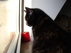 oni (mhonolog) Tags: cats cat kitten katzen oni akki miez