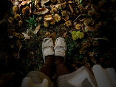an answer to (*brilho-de-conta) Tags: autumn feet shoes stripes chestnuts holysloot