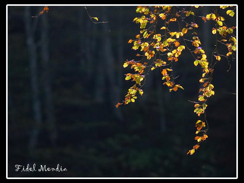 otoño en Kakueta