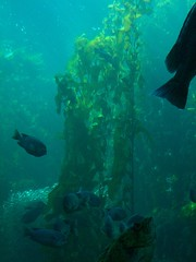the kelp forest (axellrose00) Tags: family vacation aquarium monterey carmel
