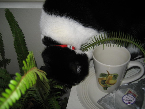 elly investigating my new tea