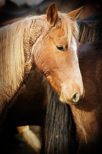 gathering mares 402