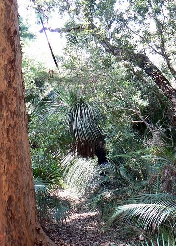 Crommelin Arboretum  2