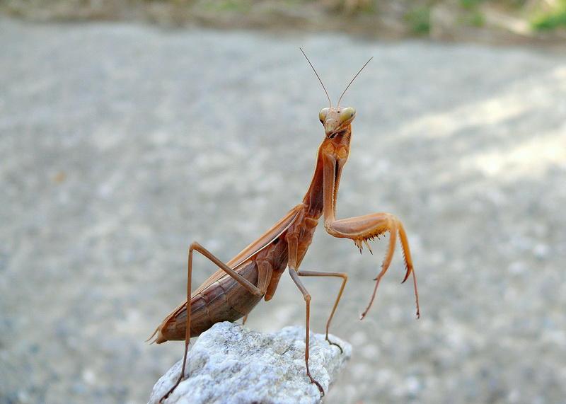Quelques insectes sympathiques ... 2235262597_d2ff9ab463_o