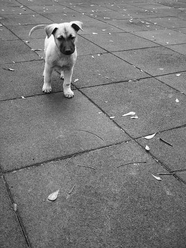 dog  (by 小帽(Hat))