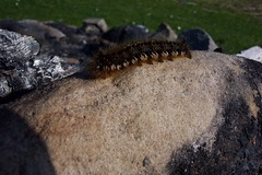 Eigg 2004-250.JPG (SueWalkerWhite) Tags: scotland highlands eigg smallisles