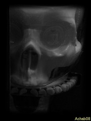 Scary plastic toy (Gian Michele Brandi) Tags: toy toys scary head bones horror bone uman teschio giocattoli ossa umano plastica paura brutto giocattolo scheletro cranio pauroso nikonl12 achab08
