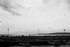Una tarde ms (- Alius -) Tags: sea sky blackandwhite blancoynegro birds port puerto uruguay mar barcos ships horizon aves pajaros cielo horizonte puntadeleste