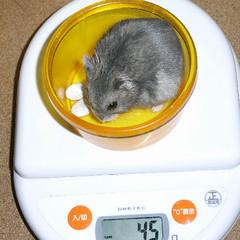 コー太は先週より少し体重減少