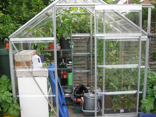Greenhouse May 2009