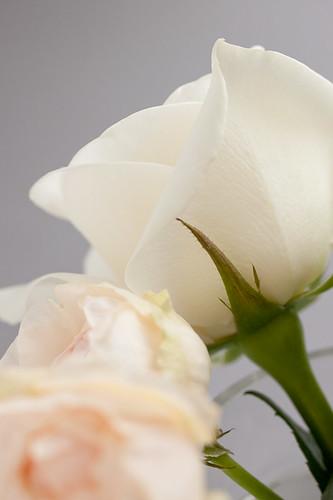 0905 flowers #7