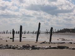 Spu017 Groynes; Spurn Point (holymoor) Tags: seascape beach groyne