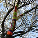 yarnbombing my cherry tree