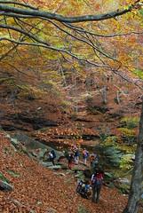 il guado (supersky77) Tags: wood autumn alps fall nature forest natura piemonte alpen autunno alpi piedmont beech bosco fagus foresta faggio valgrande
