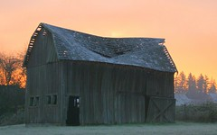 Urban barn (JojoDee) Tags: abandoned oregon barn sunrise portland beaverton frostymorning 173rdandwalker