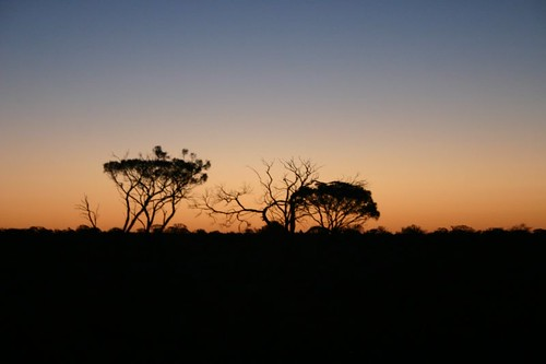 Magnificent bush sunset, 70 km north of Port Augusta.