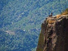 Man On The Edge (Don Csar) Tags: cliff mountain chihuahua person human brave montaa mirador acantilado fearless divisadero valor barrancasdelcobre valiente precipicio heighs piedravolada coopercanyon