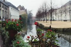 Brugge 2002 Flowers