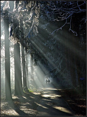 Friends Forever (Bruno Misseeuw) Tags: morning trees winter friends shadow people sun nature bomen woods europe belgium path pad belgi points forever rays loppem vanishing bos schaduw zon soe flanders mensen vlaanderen zonnestralen tillegem tillegembos golddragon abigfave shieldofexcellence irresistiblebeauty citrit betterthangood theperfectphotographer httpwwwyoutubecomwatchvnuxs9t3tny brunomisseeuw