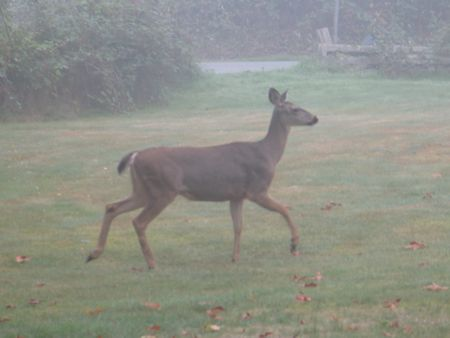 Whidbey Wildlife