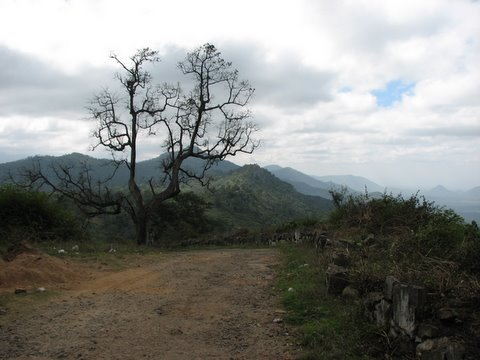 dried tree scenery b r hills