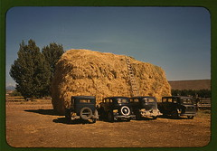 Hay stack and automobile of peach pickers, Del...