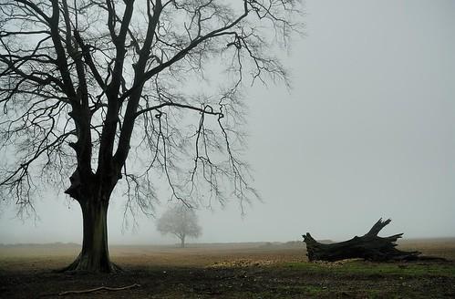Ditcham - February mist