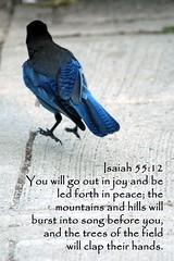 Isaiah 55:12 (flyingibis) Tags: bird jump jay joy bible isaiah praise