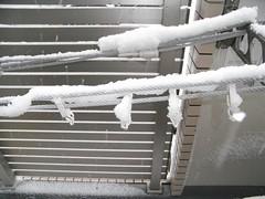snow 东京又下雪了 20080203 5