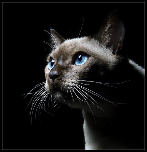 cat eyes fotos. Cat Eyes