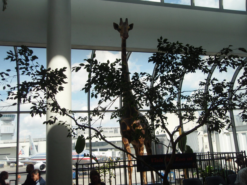 A giraffe display at Miami International Airport