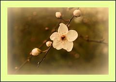 tiny flowers (waceyboy) Tags: flowers macro yellow canon eos rebel kent frame hythe xti 400d thebestyellow wonderfulworldofflowers