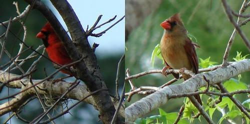 Different Cardinals