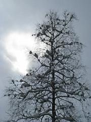 Winter mood (haikus*) Tags: winter sky tree silhouette cluds