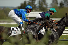 nr.4 salattus (africarola) Tags: horse schweiz switzerland zurich reiter pferde pferd horserace pferderennen zrichdielsdorf