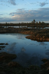 Spring evenings are inviting... You can only imagine the sounds and the smells... (Murel Merivee) Tags: sunset evening spring bog wetland mire nigula