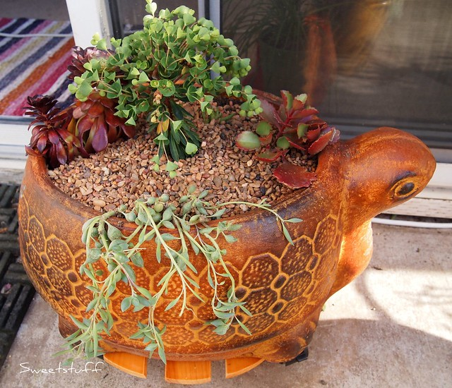 Happy Turtle pot