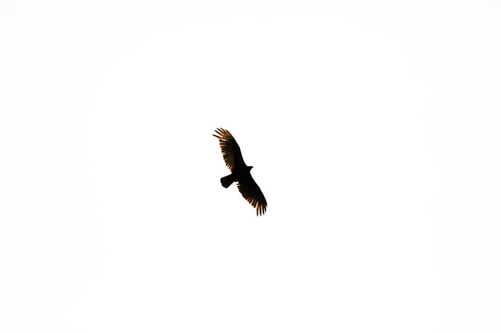 110521_HawkStandalone